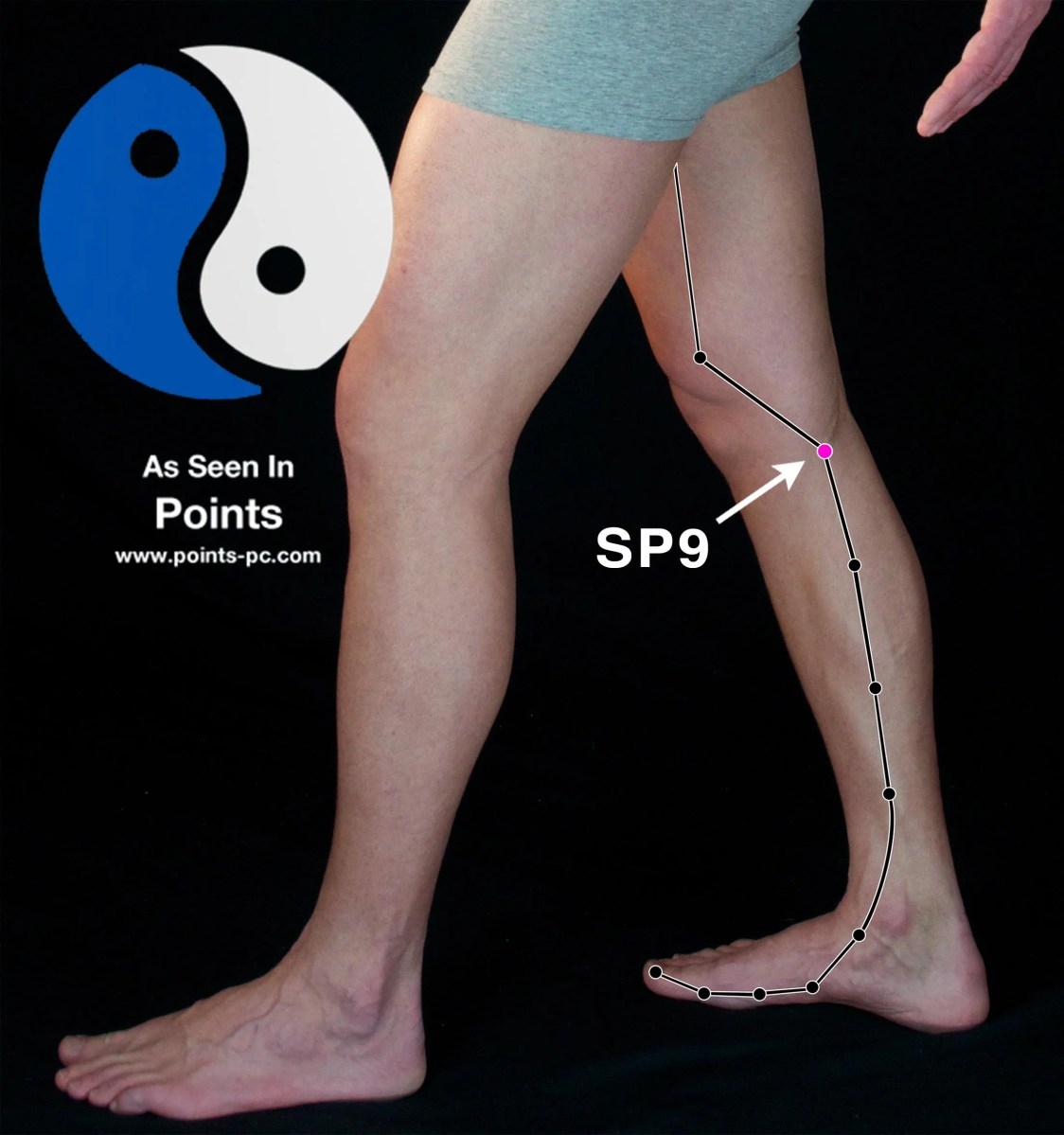 Acupuncture Point: Spleen 9
